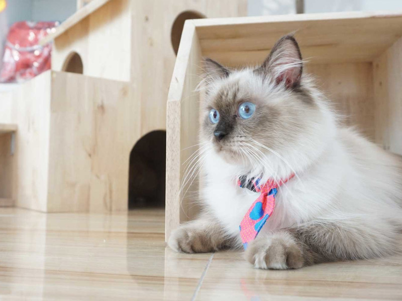 Kedi Oteli Bulmak