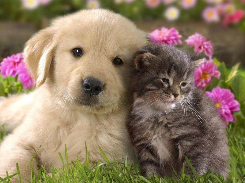 Evcil Hayvanları Besleme ve Eğitme